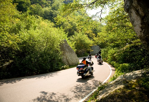 Group riding motorcycles across forest road
